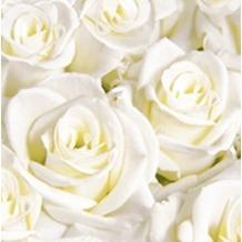 Duni Poesie-Servietten aus Dunilin Motiv White Dreams, weiße Rosen, 40 x 40 cm, 50 Stück
