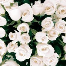 Duni Servietten Elegant Roses 33 x 33 cm 20 St.