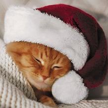 Duni Servietten Tissue Cute cat 33 x 33 cm 20 Stück