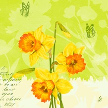 Duni Klassik-Servietten Spring Flowers 40x40 cm 4lagig, geprägt, 1/ 4 Falz 50 Stück