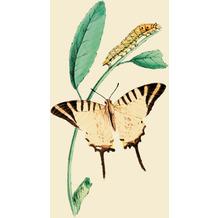Duni Servietten Tissue Nature butterfly 33 x 33 cm 20 Stück