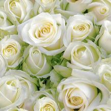 Duni Servietten Tissue White roses 24 x 24 cm 20 Stück