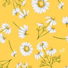 Duni Tissue Servietten Pretty Daisy Yellow 24 x 24 cm 20 Stück