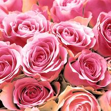 Paper+Design Servietten Tissue Pink Roses 33 x 33 cm 20er