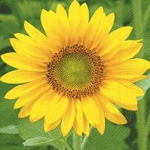 Paper+Design Tissue Servietten Sunflower 33 x 33 cm 20 Stück